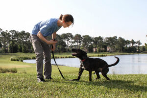 dog being trained by Pittsburgh dog trainer